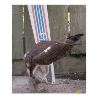 Osprey Snack Poster