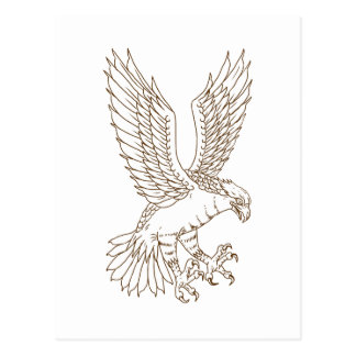 Osprey Swooping Drawing Postcard