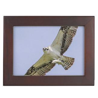 Osprey with a fish keepsake box
