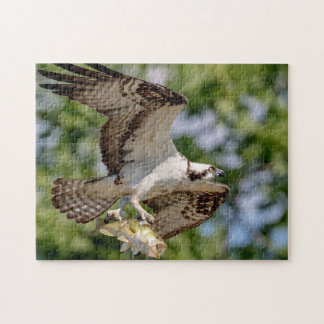 Osprey with a large mouth bass jigsaw puzzle