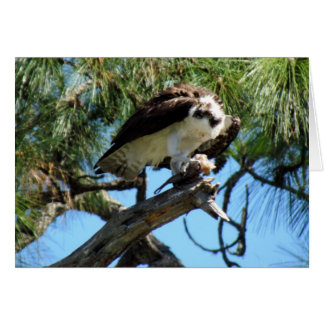 Osprey's Lunch Greeting Card