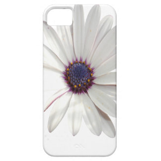 Osteospermum Daisy with Purple Centre Case For The iPhone 5