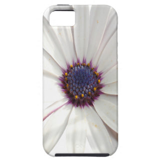 Osteospermum Daisy with Purple Centre iPhone 5 Cases