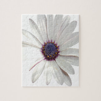 Osteospermum Daisy with Purple Centre Jigsaw Puzzle