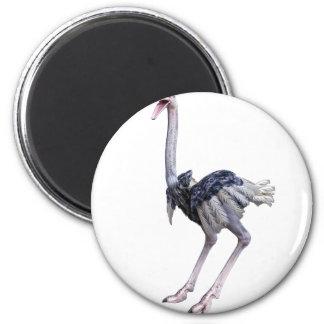 Ostrich 2 Inch Round Magnet