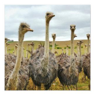 Ostrich Bird Card