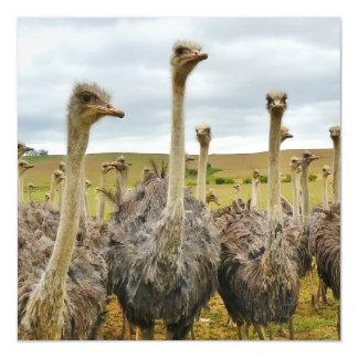 Ostrich Bird Magnetic Invitations