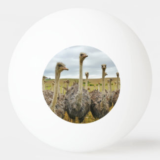 Ostrich Bird Ping Pong Ball