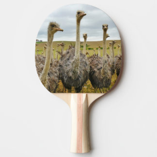 Ostrich Bird Ping Pong Paddle