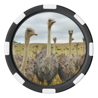 Ostrich Bird Set Of Poker Chips