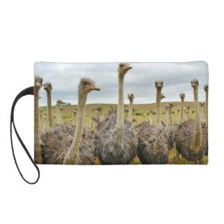Ostrich Bird Wristlet Clutches