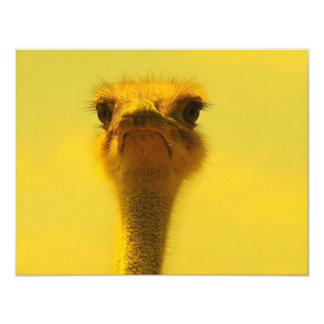Ostrich Card