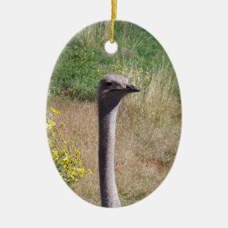 Ostrich Ceramic Oval Ornament