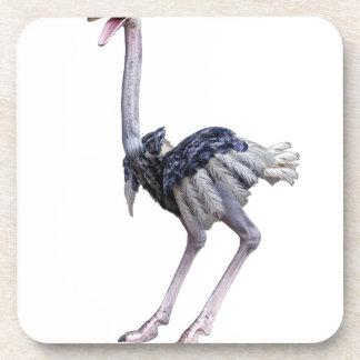 Ostrich Coaster