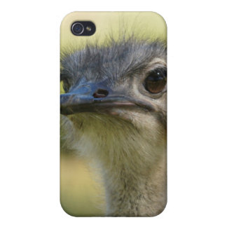 Ostrich Covers For iPhone 4