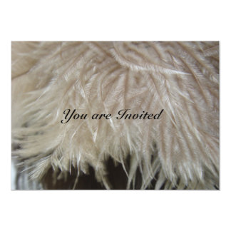 Ostrich Feathers Card