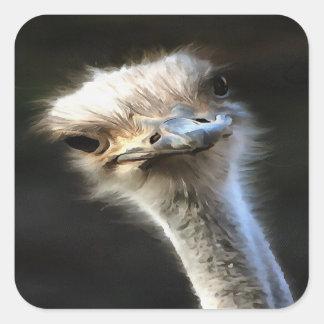 Ostrich Head Square Sticker