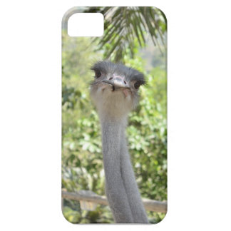 Ostrich iPhone 5 Cover