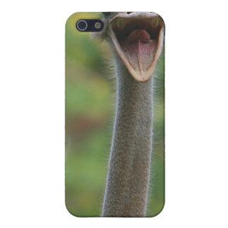 Ostrich iPhone Case 4 iPhone 5/5S Case