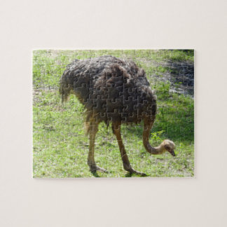 Ostrich Jigsaw Puzzle