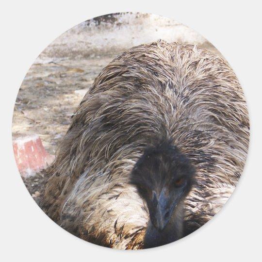 Ostrich.jpg Classic Round Sticker
