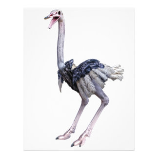Ostrich Letterhead Template