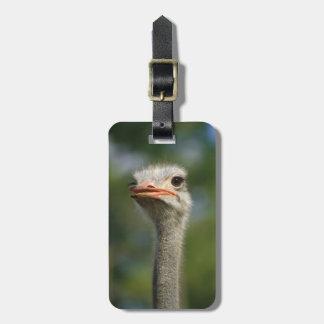 Ostrich Luggage Tag