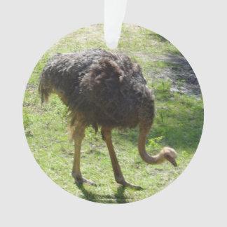 Ostrich Ornament