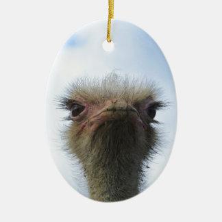 Ostrich Portrait Ceramic Oval Ornament