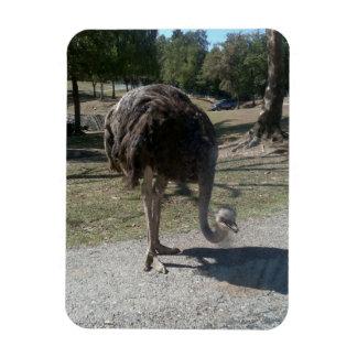 Ostrich Rectangular Photo Magnet