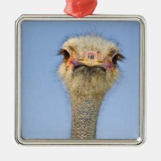 Ostrich Silver-Colored Square Ornament
