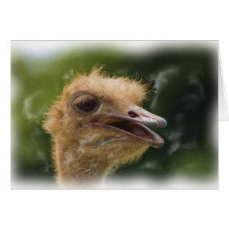Ostrich Talk Card