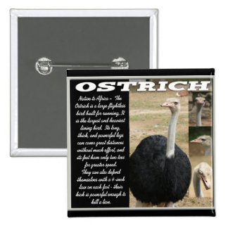 OSTRICH with Description 2 Inch Square Button