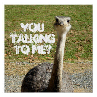 Ostrich You talking to Me? Poster