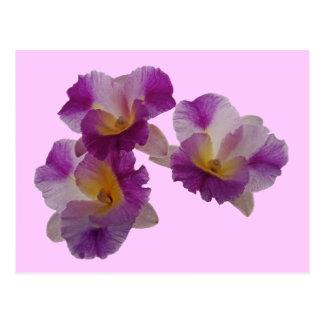 Otaara Orchid Postcard