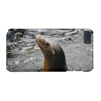 Otarie dans l'eau - photographie animale