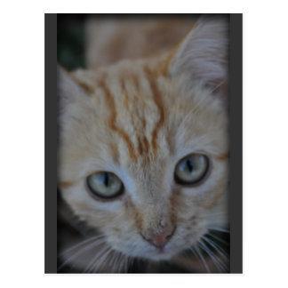 Otis Kitty Postcard