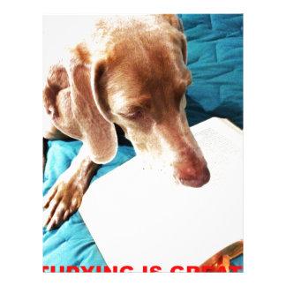 Otis Says: Studying Is Great!! Letterhead