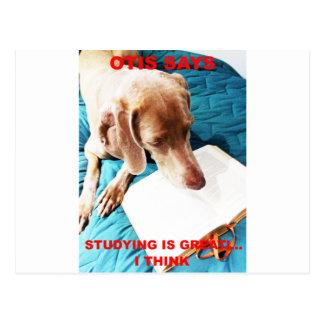 Otis Says: Studying Is Great!! Postcard