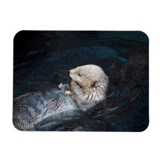 Otter eating water animal nature aquatic wild zoo magnet