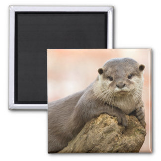 Otter Fridge Magnet