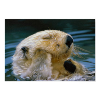 Otter in the pool poster