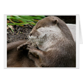 Otter-ly Amazing Holidays Card