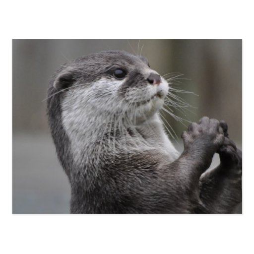 Otter Mastermind Postcard