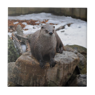 Otter on rock tile
