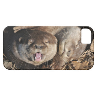 Otter photo iPhone 5 case