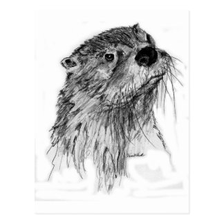 Otter Whiskers Postcard