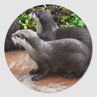 Otterly To Cute, Otter Round Stickers