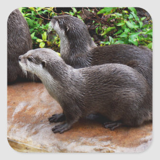 Otterly To Cute, Otter Square Stickers