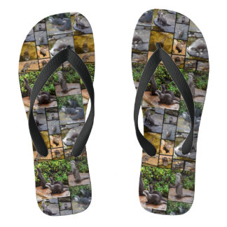 Otters In A Photo Collage, Flip Flops
